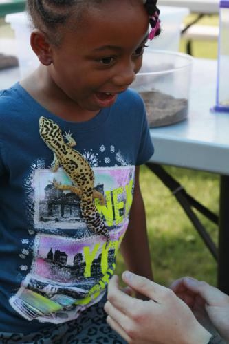 A visit from lizards and amphibians in Sproutside!
